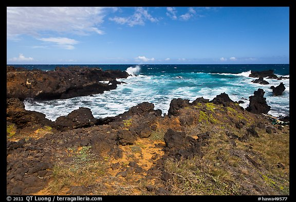 Grasses and volcanic shore, South Point. Big Island, Hawaii, USA (color)