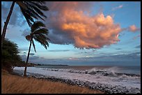 Palm trees, cloud, and ocean surf at sunset. Lahaina, Maui, Hawaii, USA ( color)