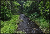 Creek through tropical forest. Maui, Hawaii, USA ( color)
