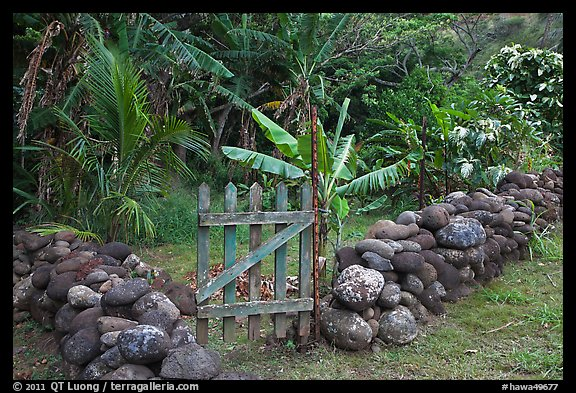 Tropical garden delimited by low stone walls. Maui, Hawaii, USA