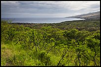 Mamalu Bay seen from verdant hills. Maui, Hawaii, USA (color)