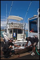 Men cutting fish caught in sport-fishing expedition. Lahaina, Maui, Hawaii, USA