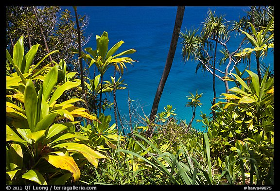 Tropical foliage and blue waters, Na Pali coast. Kauai island, Hawaii, USA (color)