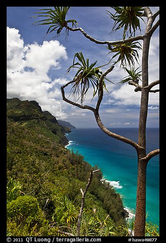 Tree and green coastline, Na Pali coast. Kauai island, Hawaii, USA