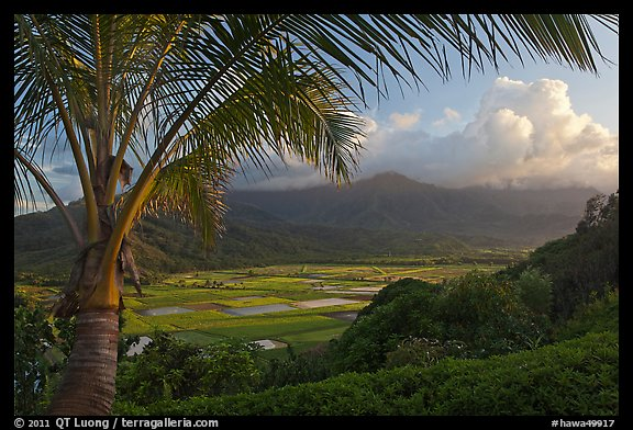 Hanalei Valley from above, sunset. Kauai island, Hawaii, USA