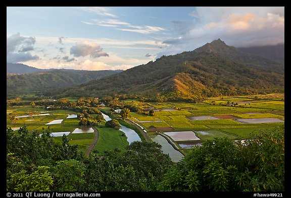 Hanalei Valley and taro paddies from above. Kauai island, Hawaii, USA