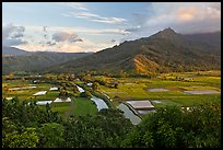 Hanalei Valley and taro paddies from above. Kauai island, Hawaii, USA ( color)