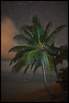 Palm tree, beach and stars. Kauai island, Hawaii, USA