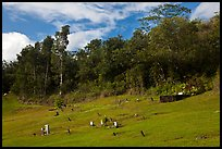 Graves on grassy slope, Hanalei Valley. Kauai island, Hawaii, USA ( color)