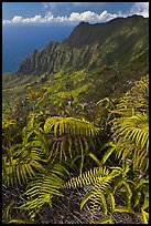 Ferns and Na Pali Cliffs, see from Kokee Mountain Park. Kauai island, Hawaii, USA