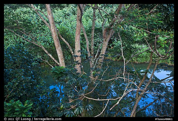 Tropical forest and stream reflecting sky. Kauai island, Hawaii, USA