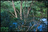 Tropical forest and stream reflecting sky. Kauai island, Hawaii, USA (color)