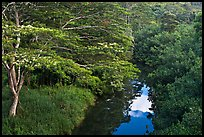 Stream and lush forest from above. Kauai island, Hawaii, USA