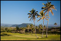 Golf course with palm trees, Punaluu. Big Island, Hawaii, USA ( color)