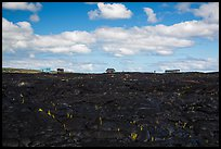 Houses on fresh lava field, Kalapana. Big Island, Hawaii, USA (color)