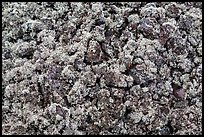 Moss-covered lava rocks. Big Island, Hawaii, USA (color)