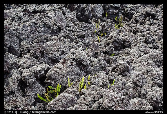Ferns and lava rocks covered with moss. Big Island, Hawaii, USA (color)