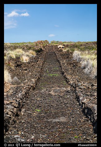Ancient road made of lava rocks, Kaloko-Honokohau National Historical Park. Hawaii, USA (color)