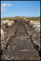 Ancient road made of lava rocks, Kaloko-Honokohau National Historical Park. Hawaii, USA ( color)