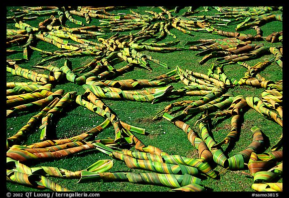 Pandanus leaves being dried. American Samoa