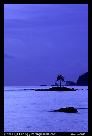 Coconut tree on islet in Leone Bay, dusk. Tutuila, American Samoa (color)