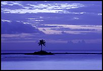 Lone palm tree on a islet in Leone Bay, dusk. Tutuila, American Samoa