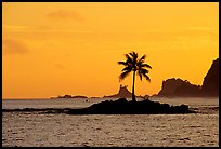 Lone coconut tree on a islet in Leone Bay, sunset. Tutuila, American Samoa ( color)
