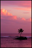 Lone palm tree on a islet in Leone Bay, sunset. Tutuila, American Samoa