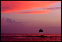 Palm tree on a islet in Leone Bay, sunset. Tutuila, American Samoa