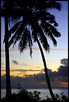 Cocunet trees at sunset, Leone Bay. Tutuila, American Samoa (color)