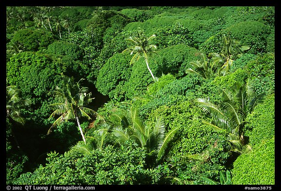 Tropical vegetation. Aunuu Island, American Samoa (color)