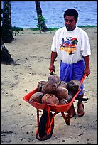 Villager carying coconuts in a wheelbarel. Tutuila, American Samoa ( color)
