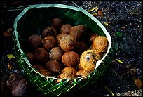 Coconuts contained in a basket made out of a single palm leaf. Tutuila, American Samoa ( color)