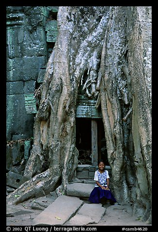 Girl sits at the base of huge bayan tree encroaching on ruins in Ta Prom. Angkor, Cambodia