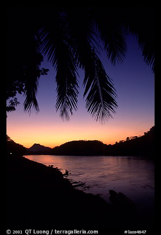 Sunset on the Mekong river framed by coconut trees, Luang Prabang. Mekong river, Laos (color)