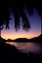 Sunset on the Mekong river framed by coconut trees, Luang Prabang. Mekong river, Laos