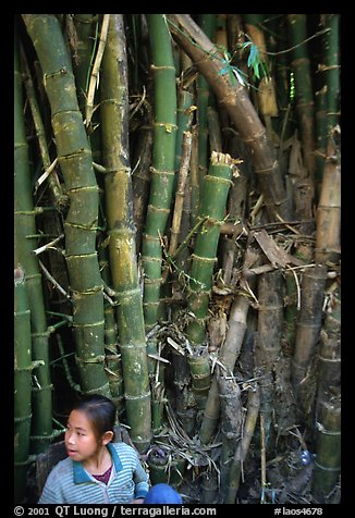 Girl and bamboo, Ban Xan Hai. Laos