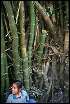 Girl and bamboo, Ban Xan Hai. Laos (color)