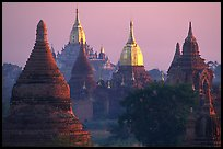 Innumerable temples seen from Mingalazedi. Bagan, Myanmar ( color)