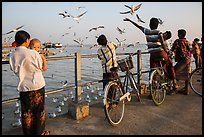 Yangon River pier with seagulls fed by visitors. Yangon, Myanmar ( color)