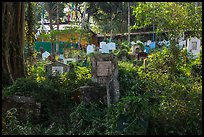 Graves and vegetation in Muslim Cemetery. Yangon, Myanmar ( color)