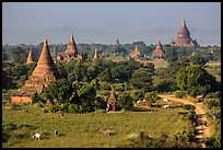 Rural scene with cattle and peasants working in fields below pagodas. Bagan, Myanmar ( color)