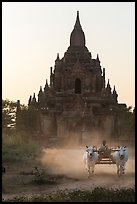 Ox cart riding in front of Tayok Pye temple. Bagan, Myanmar ( color)
