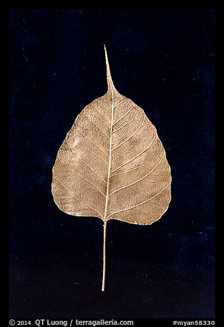 Leaf made of gold. Mandalay, Myanmar (color)