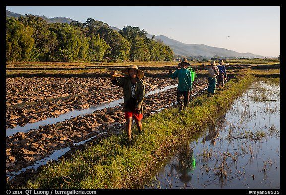 Villagers returning from a day of work in the fields, Maing Thauk Village. Inle Lake, Myanmar (color)