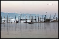 Fence, birds, and hill at dawn. Inle Lake, Myanmar ( color)