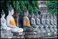 Buddha statues, swathed in sacred cloth as a sign of reverence, Wat Chai Mongkon. Ayuthaya, Thailand ( color)