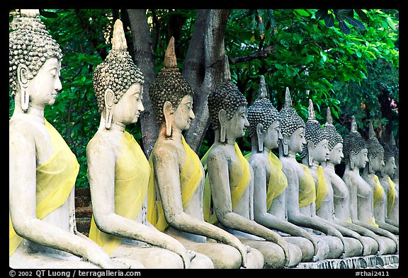 Row of Buddha images in Wat Chai Mongkon, reverently swathed in cloth. Ayuthaya, Thailand (color)