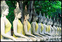 Row of Buddha images in Wat Chai Mongkon, reverently swathed in cloth. Ayuthaya, Thailand ( color)