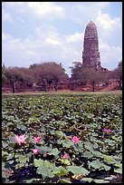 Lotus pond and  corn-shaped chedi. Ayuthaya, Thailand (color)